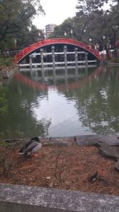 住吉大社太鼓橋(反り橋)